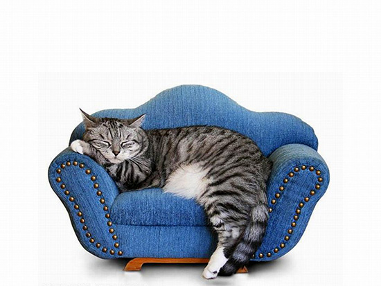 Pets Furniture – New Gap of Furniture Industry ...